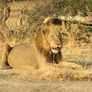 Explore Kafue National park