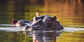 Livingstone River Safaris