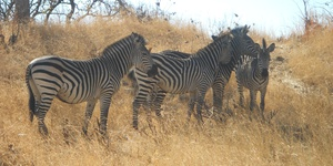 South Luangwa, Victoria Falls and Livingstone