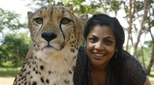 Cheetah Volunteering project (Victoria Falls Zambia